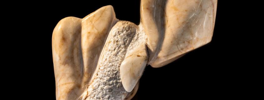 Ο αργοπλεύστης - Συλλογή Καλλιόπης και Αθανασίου Λωρίδα, USA